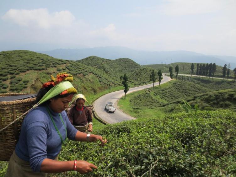 लकडाउनले चिया क्षेत्रमा समस्याः  श्रमिक र किसानलाई हातमुख जोड्न गाह्रो