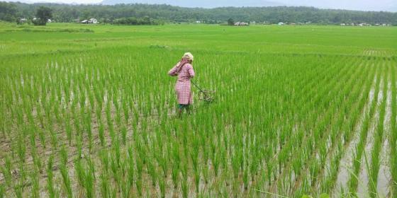 रासायनिक मलको प्रयोग घटाउन प्राङ्गारिक खेतीमा जोड दिँदै सरकार